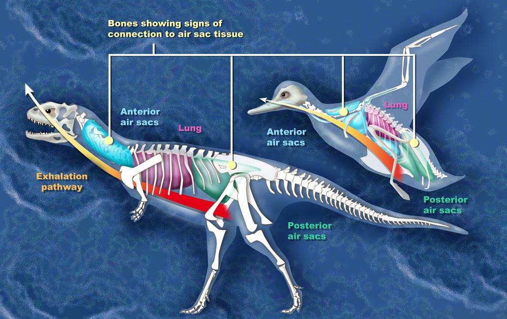 El origen de las aves