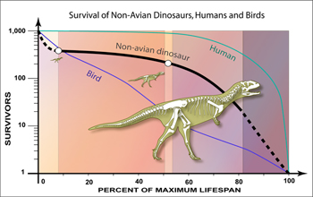 Paleontologists have uncovered the ages of a population on non-avian dinosaurs.