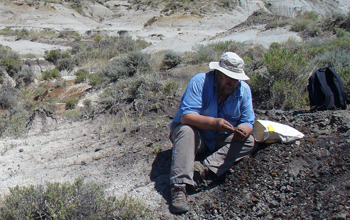 Scientist collects a sample from a coal bed near the dinosaur extinction level.