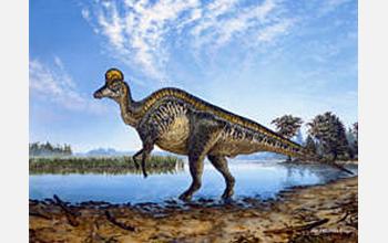 Una reconstrucción del corythosaurus lambeosaurio con cresta de casco.