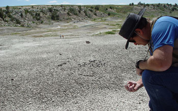 Photo of a scientist inspecting a find in Como Bluff Quarry sediments.