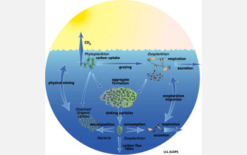 Illustration showing chemoattraction throughout the ocean's microbial food webs.