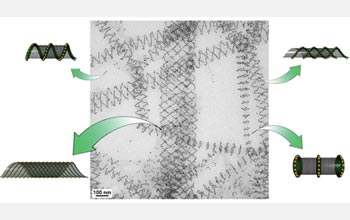Illustration of different nanotube conformations observed in a single TEM image.