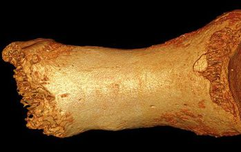 Photo of a toe bone from the Altai Mountains used to find segments of Neanderthal ancestry