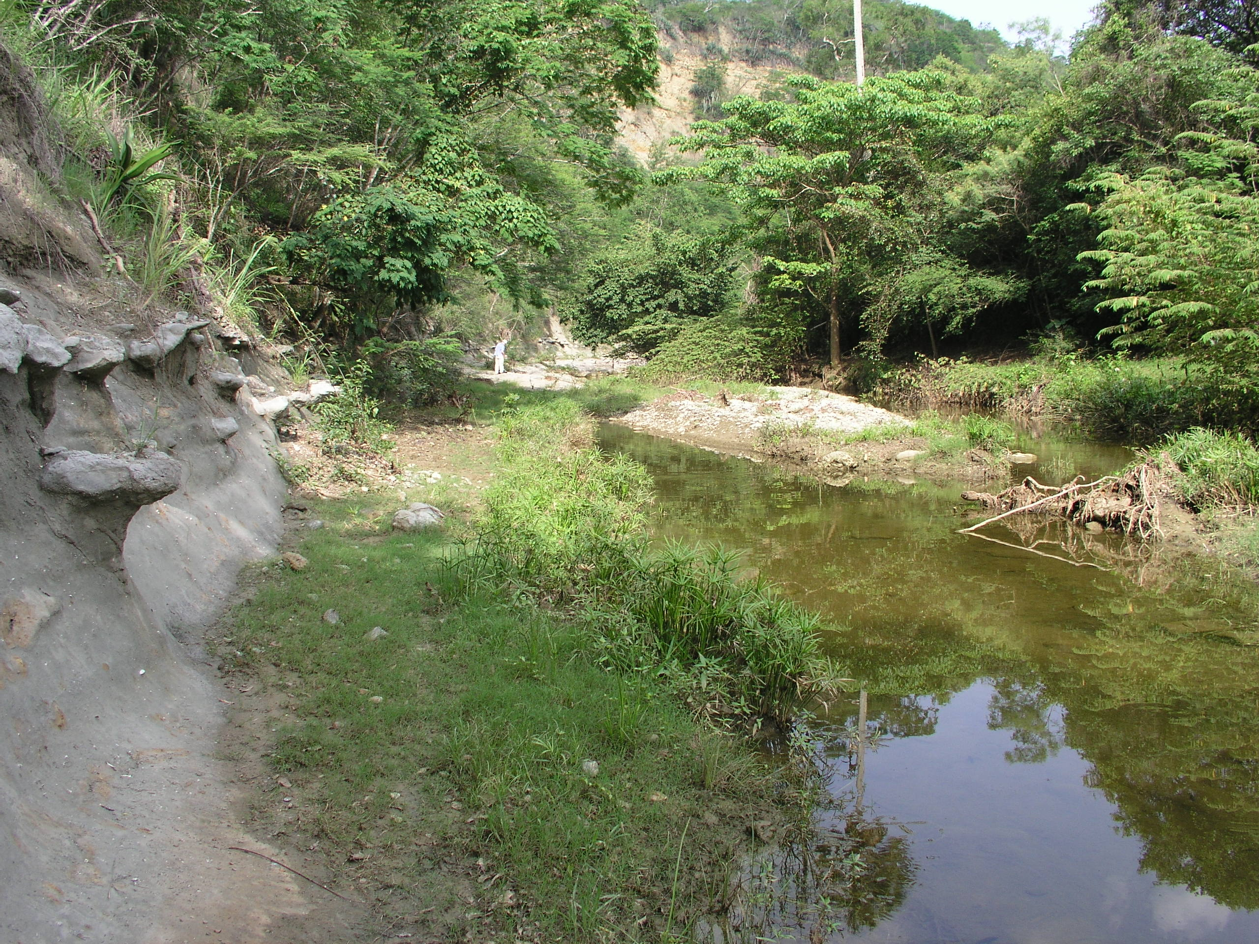 Sediments along this stream in the Dominican Republic contain fossil corals.