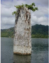 Photo of an old tree stump growing out of the ancient lake bed at Lake Bosumtwi, Ghana.