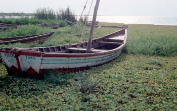 Photo of a boat in a wetland along Lake Victoria.