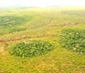 Photo of dry forest islands in a sea of Brazilian savanna.