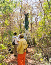 Photo of monitoring tower being installed by scientists at the Minas Gerais Institute of Forests.