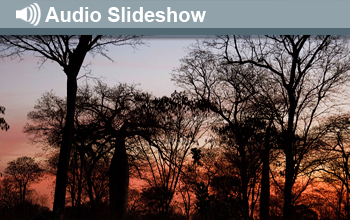 Photo of silhouette forest and the words Audio Slideshow.