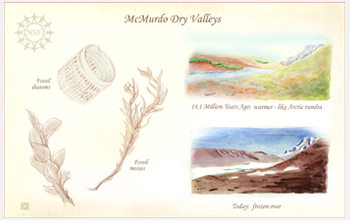 Sketches of fossils.