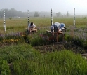 Scientists research climate change effects on prairie plants at the Cedar Creek, Minn., LTER site.