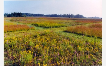 This experimental plot is planted with four species of flowering prairie plants known as forbs.