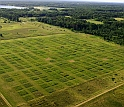 Individual plots in this aerial view of the experiment are 9 meters by 9 meters.