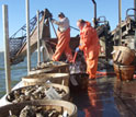 Photo of two men on a boat harvesting oysters with buckets of oysters on the deck.