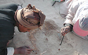 Photos of workers excavating and ancient Egyptian skeleton.
