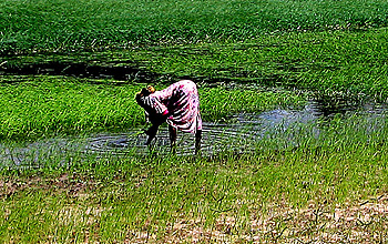 Photo of person and water and field