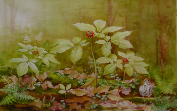 Painting of the herb American ginseng