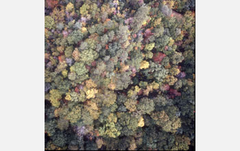 Photo of a forest which was used to study climate change effects.