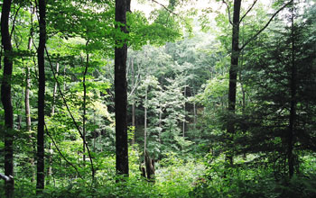 Photo of trees.