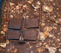 Photo of two copper quadrats in an artificial stream that measure the impact of guppies.
