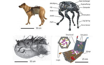 Illustration showing a dog and a shell as isnpiration for engineered nano systems