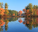 Photo of trees in their bright fall colors on the shoreline of Harvard Pond.