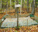 Photo of a plot on the forest floor used to measure fallen leaves and soils.