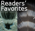 Readers Favorites
