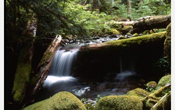 Photo of a stream tumbling over fallen logs in the Oregon Cascades.