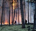 Photo of a pine forest in Siberia burning.