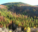 Photo of parts of the Okanogan National Forest that were not consumed by wildfire.