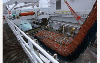 Photo of a trawl net carrying Alaskan pollock being brought aboard a U.S. vessel.