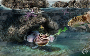 An artist's representation of the midshipman fish singing to attract a mate.