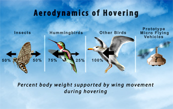 Aerodynamics of hovering