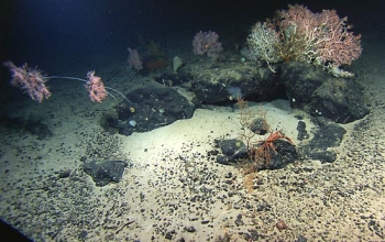 Rocks made of basalt on and under the ocean bottom harbor surprising numbers of deep-sea bacteria.