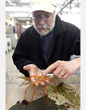 Photo shows Sam Bowser holding a sea star found at McMurdo Sound.