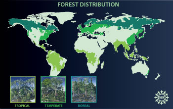 Illustration showing forest distribution on the Earth's landmass.