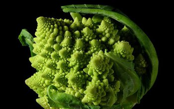 The fractal nature of Romanesco broccoli