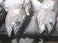 Ahi tuna heads on display at the market