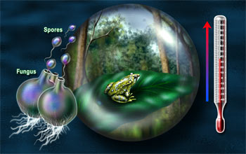 Illustration showing a frog in globe, increasing temp on thermometer, and spores from fungi.