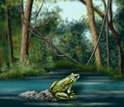 Illustration of a frog sitting on a rock in a pond.