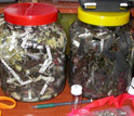 Photo of two jars of dead frogs, all killed by the fast-moving infectious disease.