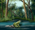 illustration showing a frog on a rock in water