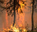 LTER scientists in Alaska work to determine what affects forest recovery after a fire.