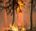 LTER scientists work to determine what affects forest recovery after a fire.