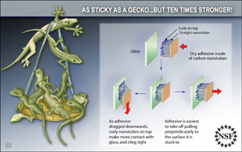 Illustration of a gecko hanging off a ledge holding nine more geckos.