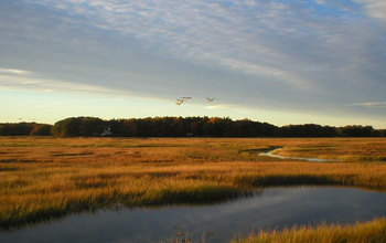 a Massachusetts marsh