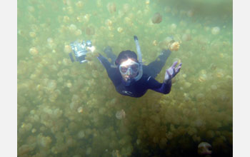 Photo of diver surrounded by jellyfish.