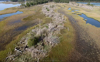 Sea-level rise marked by ghost forests and abandoned farm field